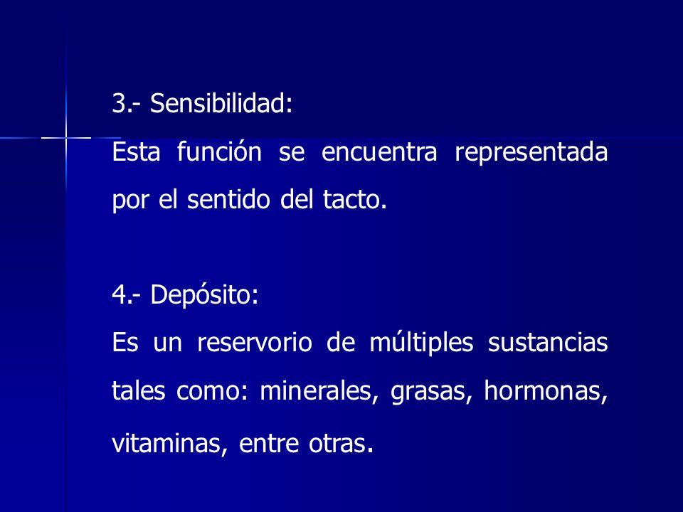 3.- Sensibilidad: Esta función se encuentra representada por el sentido del tacto. 4.- Depósito: Es un reservorio de múltiples sustancias tales como: