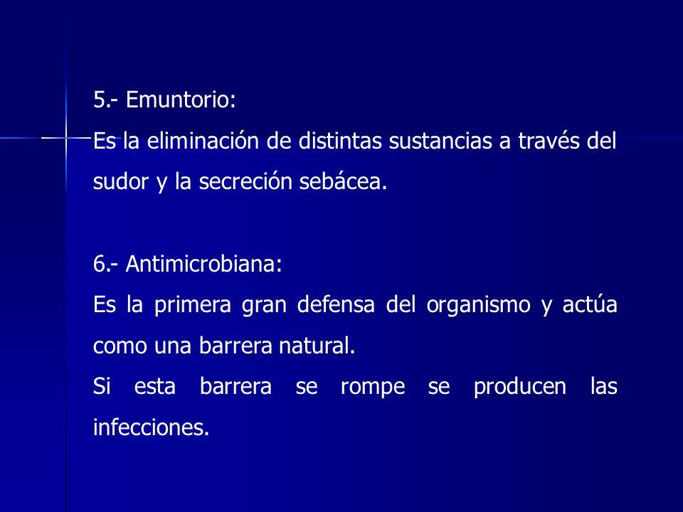5.- Emuntorio: Es la eliminación de distintas sustancias a través del sudor y la secreción sebácea. 6.- Antimicrobiana: Es la primera gran defensa del