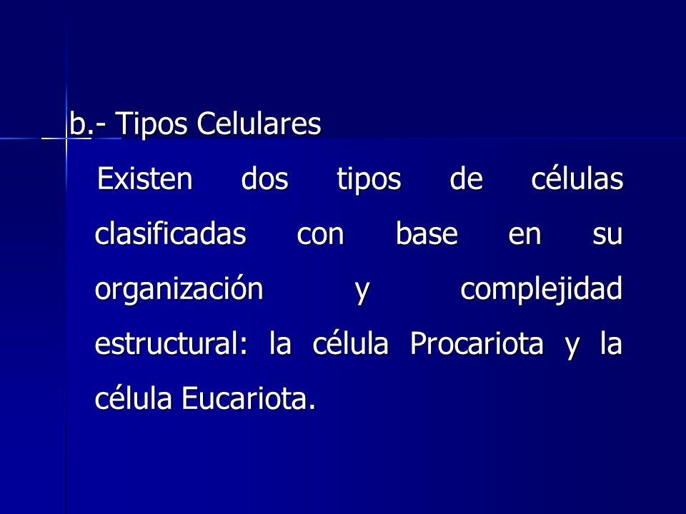 b.- Tipos Celulares Existen dos tipos de células clasificadas con base en su organización y complejidad estructural: la célula Procariota y la célula