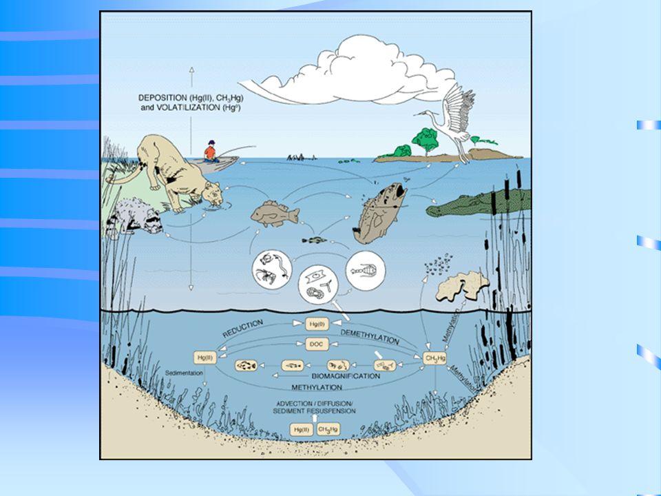 Mercurio (Hg) Ocurre de forma natural en el ambiente por la desgasificación de la corteza terrestre. Se combina con otros elementos y forma compuestos