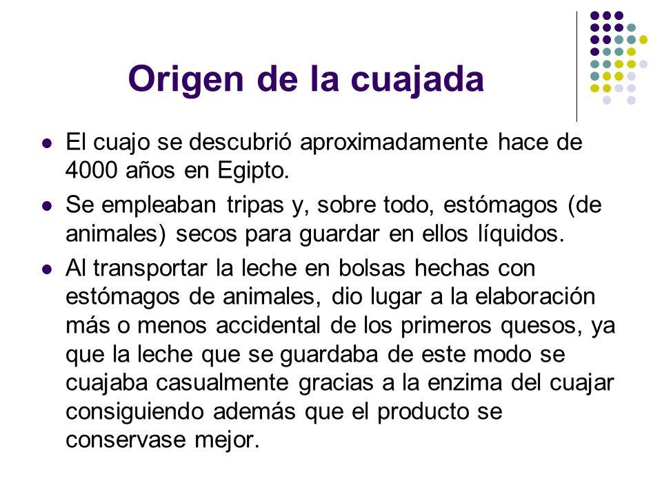 Origen de la cuajada El cuajo se descubrió aproximadamente hace de 4000 años en Egipto. Se empleaban tripas y, sobre todo, estómagos (de animales) sec