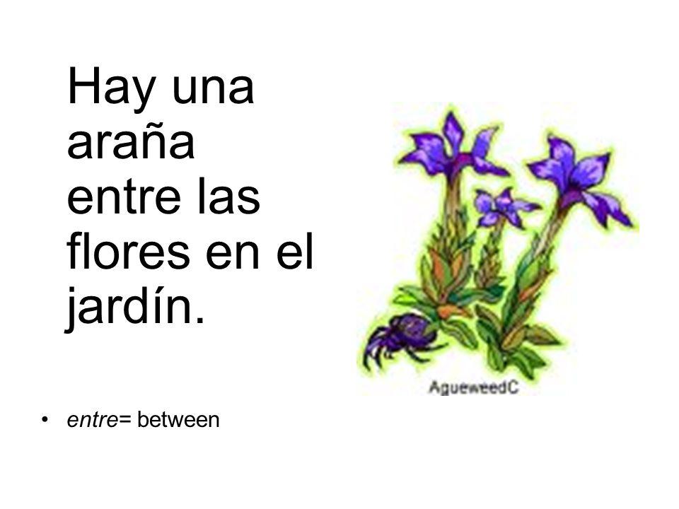 Hay una araña entre las flores en el jardín. entre= between