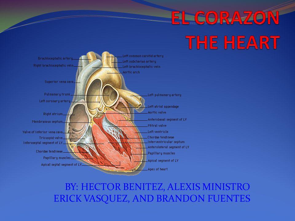 BY: HECTOR BENITEZ, ALEXIS MINISTRO ERICK VASQUEZ, AND BRANDON FUENTES