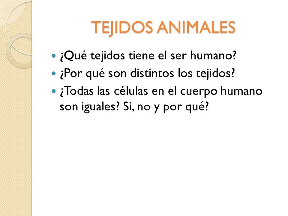 TEJIDOS ANIMALES ¿Qué tejidos tiene el ser humano? ¿Por qué son distintos los tejidos? ¿Todas las células en el cuerpo humano son iguales? Si, no y po