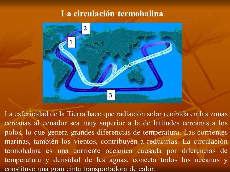La circulación termohalina La esfericidad de la Tierra hace que radiación solar recibida en las zonas cercanas al ecuador sea muy superior a la de lat