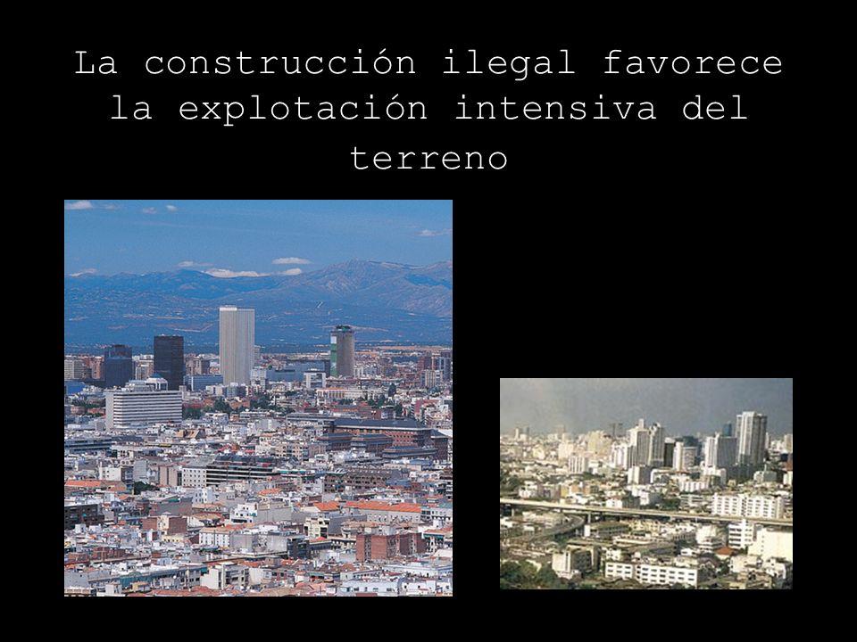 La construcción ilegal favorece la explotación intensiva del terreno