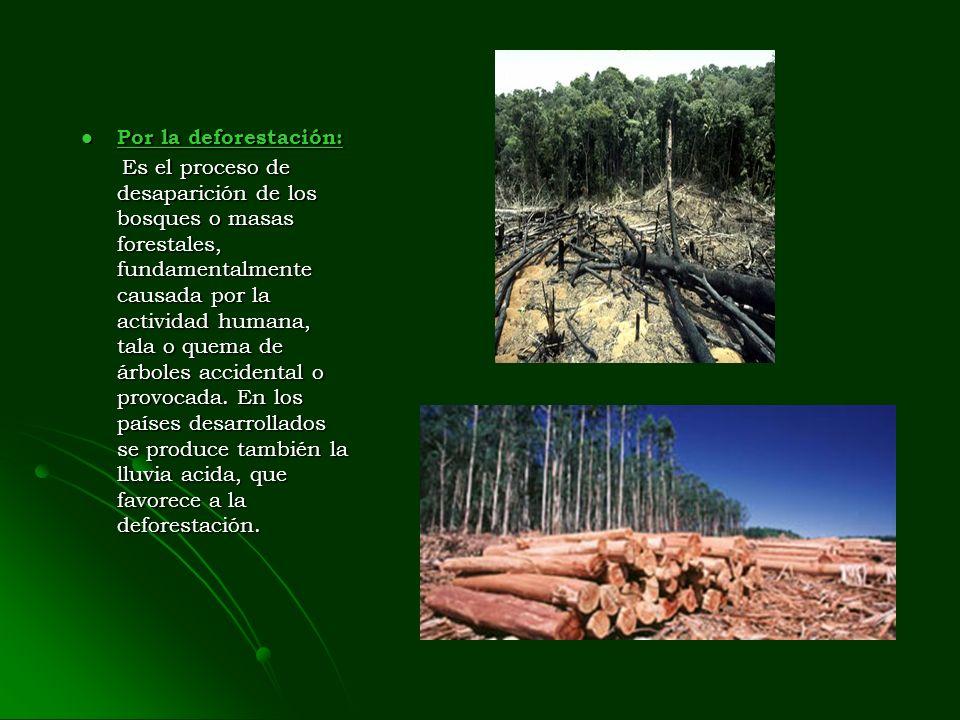 Por la deforestación: Por la deforestación: Por la deforestación: Por la deforestación: Es el proceso de desaparición de los bosques o masas forestales, fundamentalmente causada por la actividad humana, tala o quema de árboles accidental o provocada.