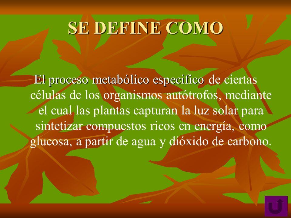 SE DEFINE COMO El proceso metabólico especifico El proceso metabólico especifico de ciertas células de los organismos autótrofos, mediante el cual las