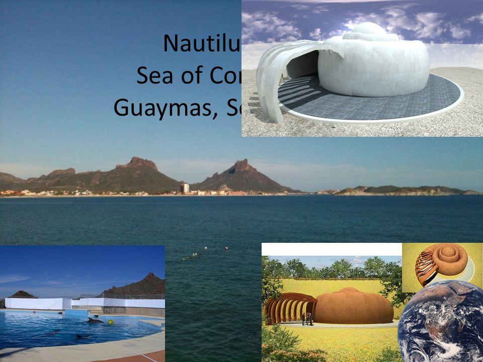 Nautilus Sea of Cortez Guaymas, Sonora