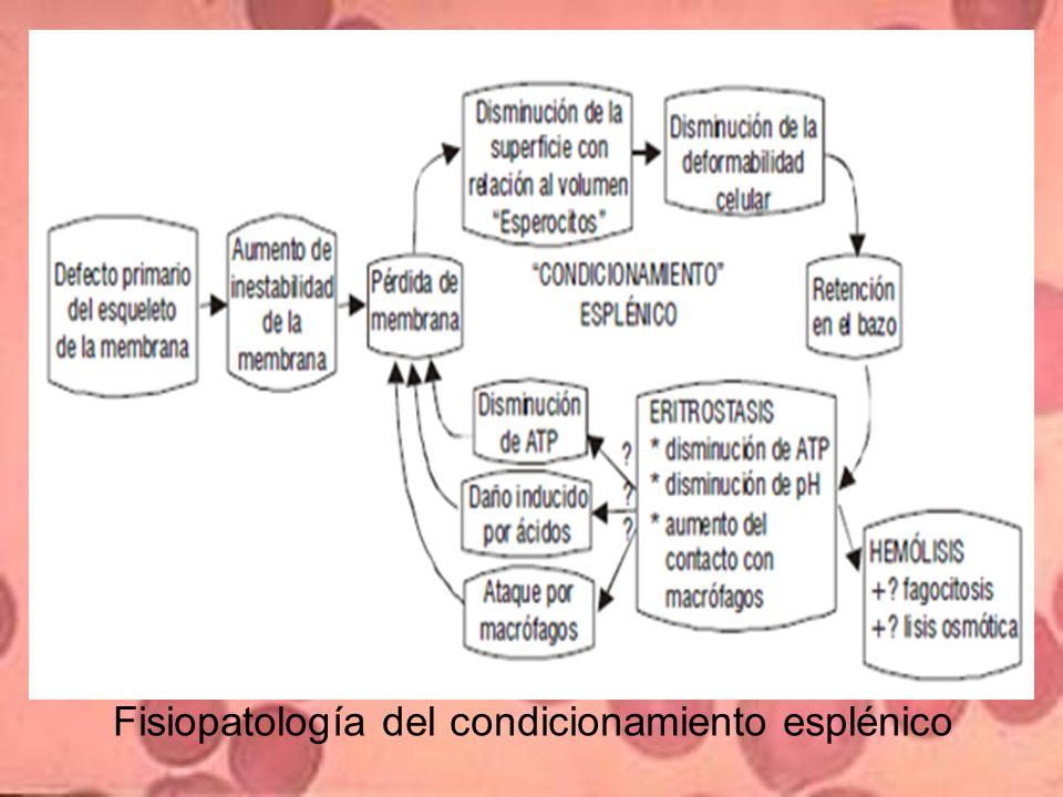 Fisiopatología del condicionamiento esplénico