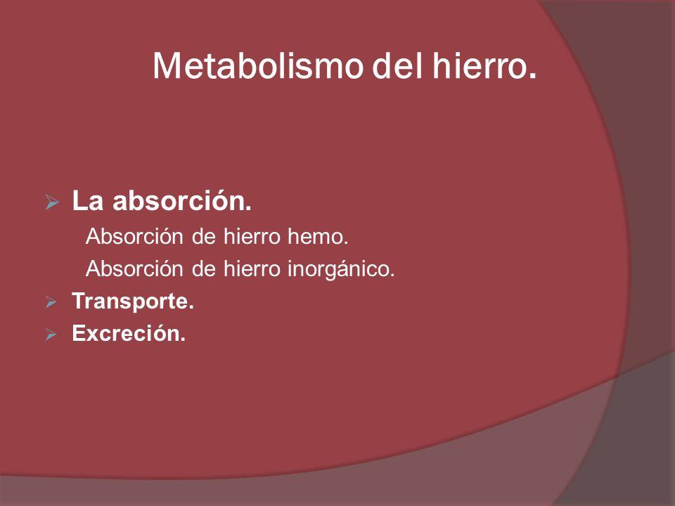 Metabolismo del hierro. La absorción. Absorción de hierro hemo. Absorción de hierro inorgánico. Transporte. Excreción.