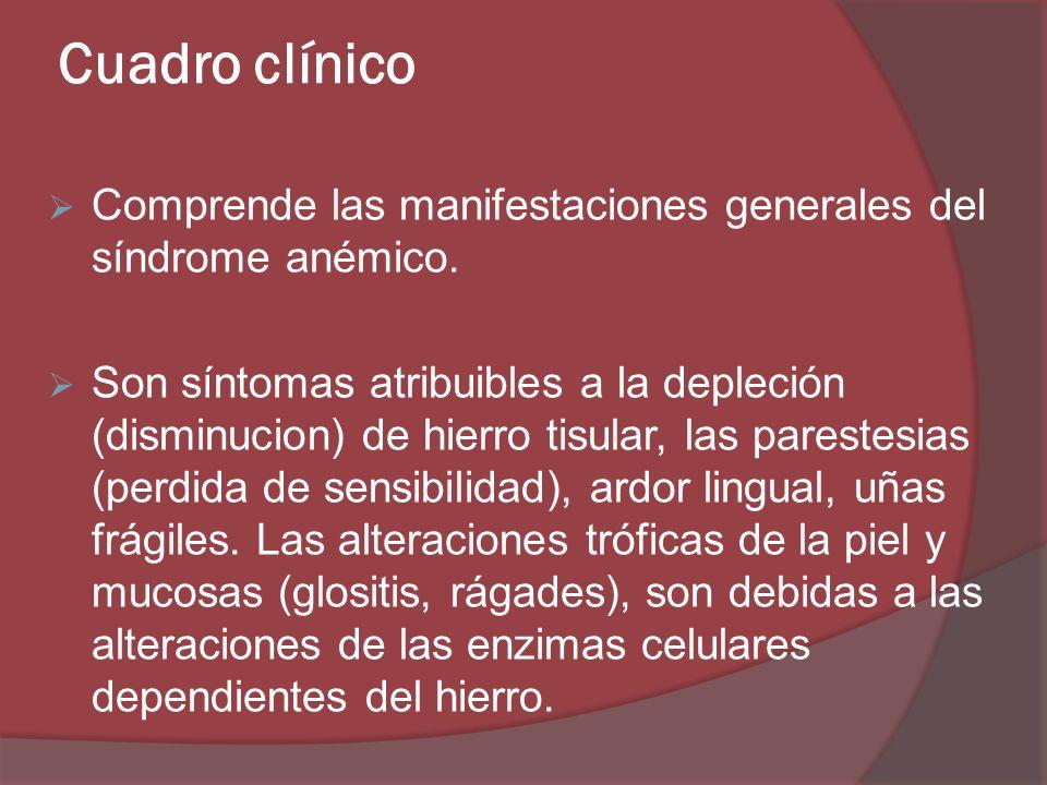 Cuadro clínico Comprende las manifestaciones generales del síndrome anémico. Son síntomas atribuibles a la depleción (disminucion) de hierro tisular,