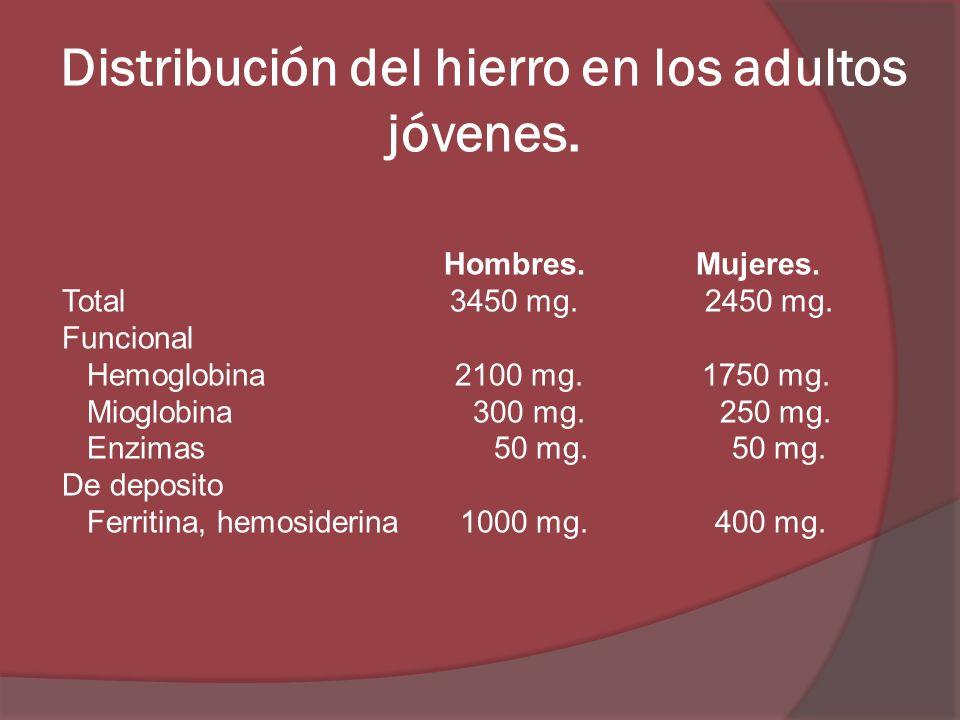 Distribución del hierro en los adultos jóvenes. Hombres. Mujeres. Total 3450 mg. 2450 mg. Funcional Hemoglobina 2100 mg. 1750 mg. Mioglobina 300 mg. 2