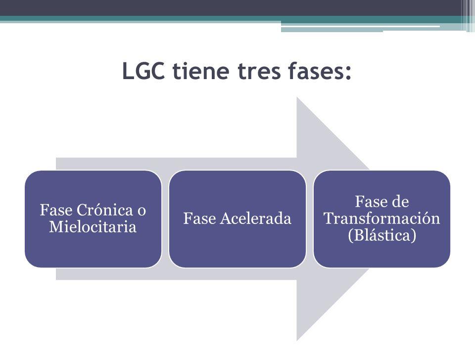 LGC tiene tres fases: Fase Crónica o Mielocitaria Fase Acelerada Fase de Transformación (Blástica)