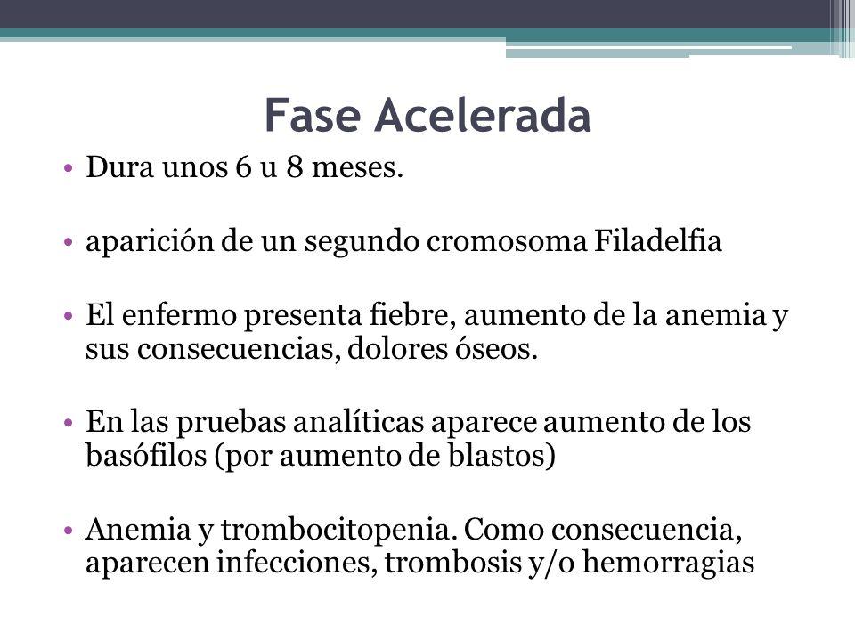 Fase Acelerada Dura unos 6 u 8 meses. aparición de un segundo cromosoma Filadelfia El enfermo presenta fiebre, aumento de la anemia y sus consecuencia