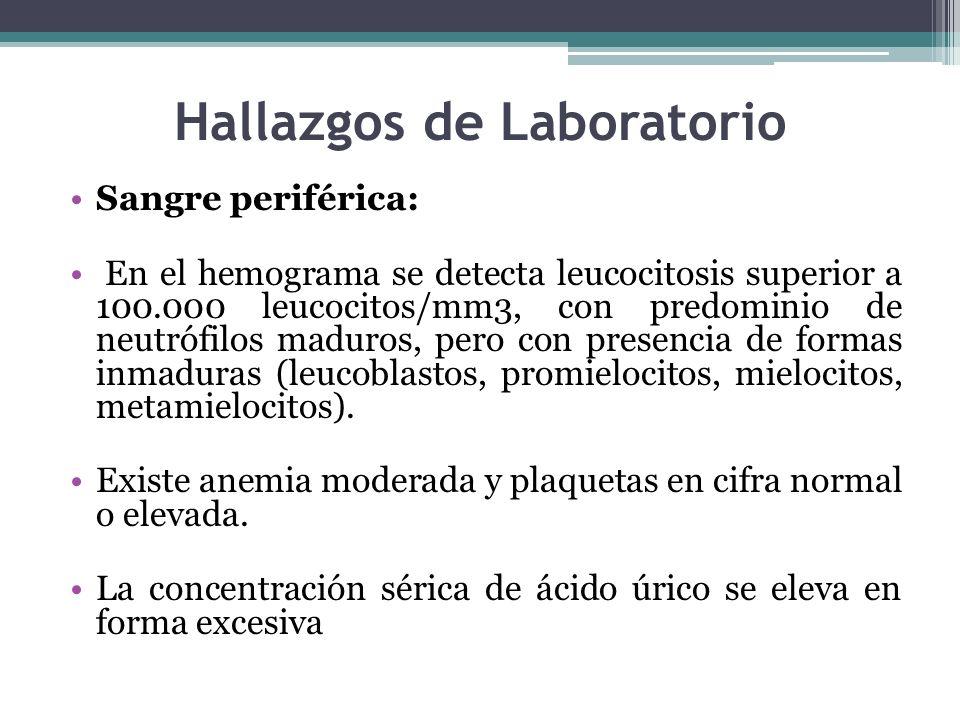 Hallazgos de Laboratorio Sangre periférica: En el hemograma se detecta leucocitosis superior a 100.000 leucocitos/mm3, con predominio de neutrófilos m