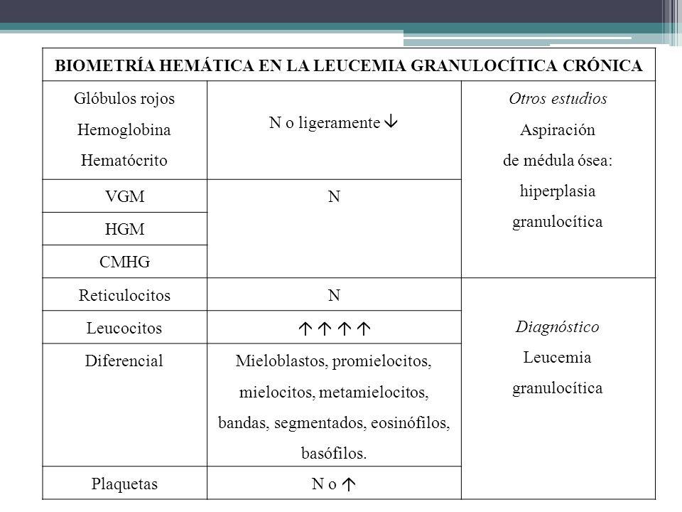 BIOMETRÍA HEMÁTICA EN LA LEUCEMIA GRANULOCÍTICA CRÓNICA Glóbulos rojos Hemoglobina Hematócrito N o ligeramente Otros estudios Aspiración de médula óse
