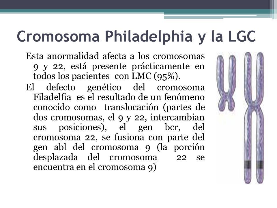 Cromosoma Philadelphia y la LGC Esta anormalidad afecta a los cromosomas 9 y 22, está presente prácticamente en todos los pacientes con LMC (95%). El