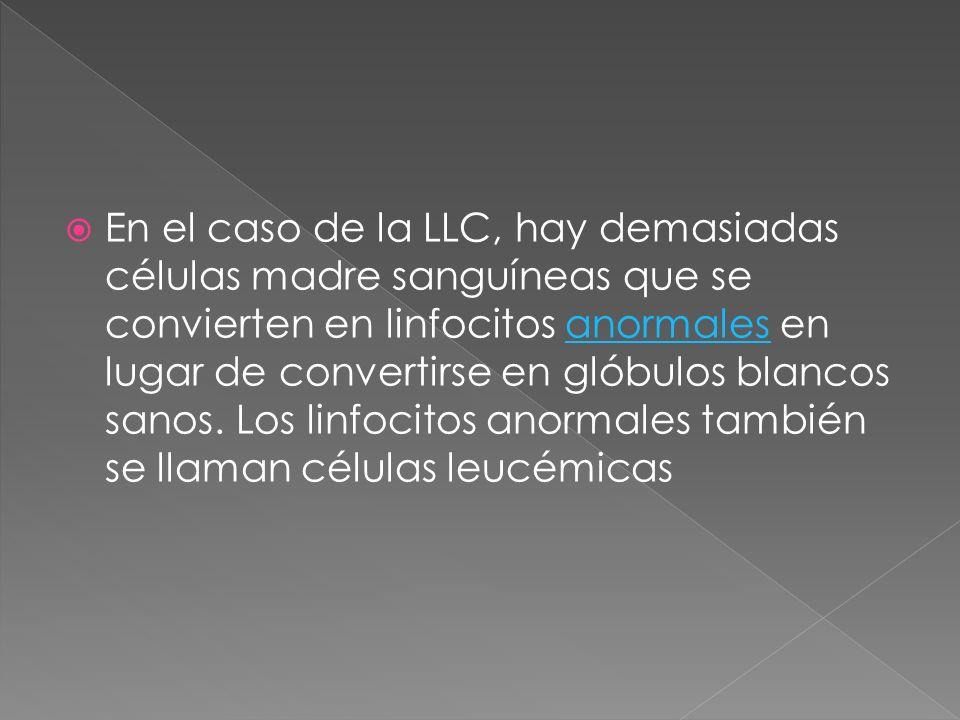 En el caso de la LLC, hay demasiadas células madre sanguíneas que se convierten en linfocitos anormales en lugar de convertirse en glóbulos blancos sa