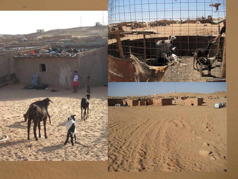 Sin agua corriente, red eléctrica, apenas trabajo y falta de medios en educación y sanidad, la vida de los refugiados saharauis discurre entre la prov