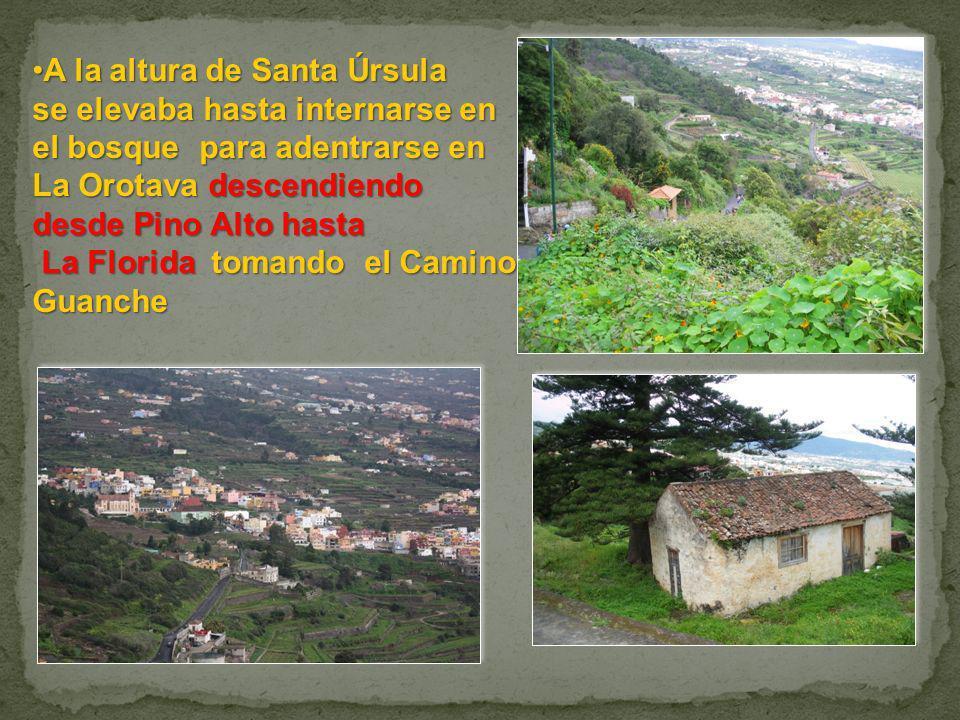 A la altura de Santa ÚrsulaA la altura de Santa Úrsula se elevaba hasta internarse en el bosque para adentrarse en La Orotava descendiendo desde Pino
