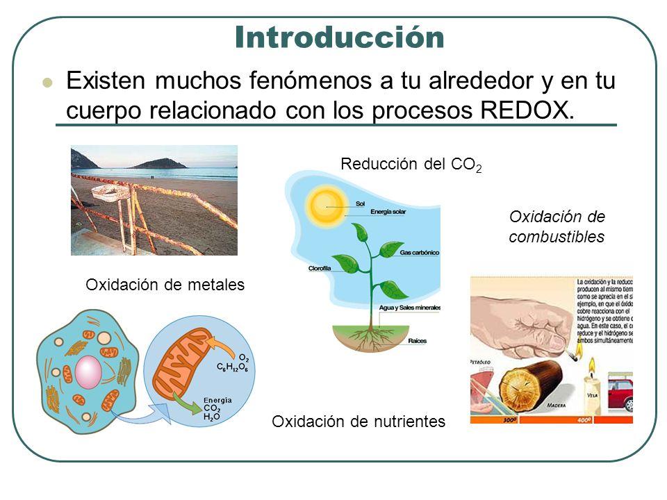 Introducción Existen muchos fenómenos a tu alrededor y en tu cuerpo relacionado con los procesos REDOX. Oxidación de combustibles Reducción del CO 2 O