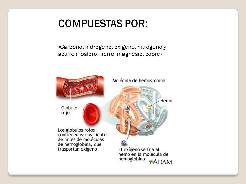 COMPUESTAS POR: Carbono, hidrogeno, oxigeno, nitrógeno y azufre ( fosforo, fierro, magnesio, cobre)