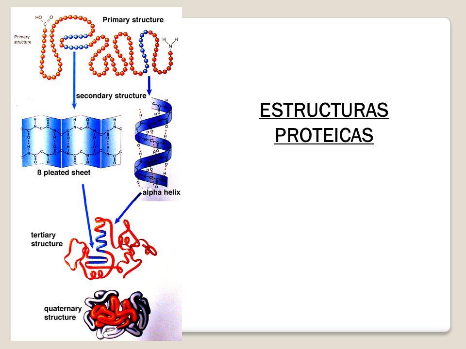 ESTRUCTURAS PROTEICAS