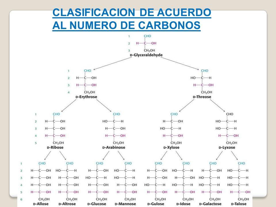 CLASIFICACION DE ACUERDO AL NUMERO DE CARBONOS