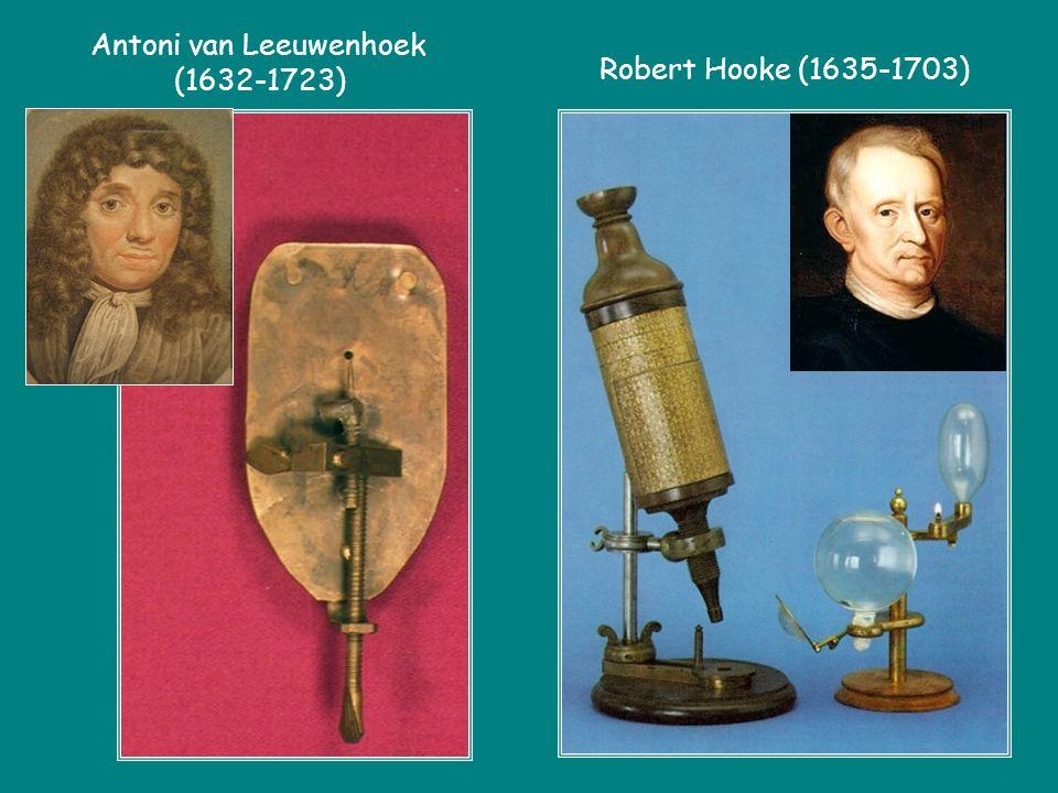 Robert Hooke (1635-1703) Antoni van Leeuwenhoek (1632-1723)