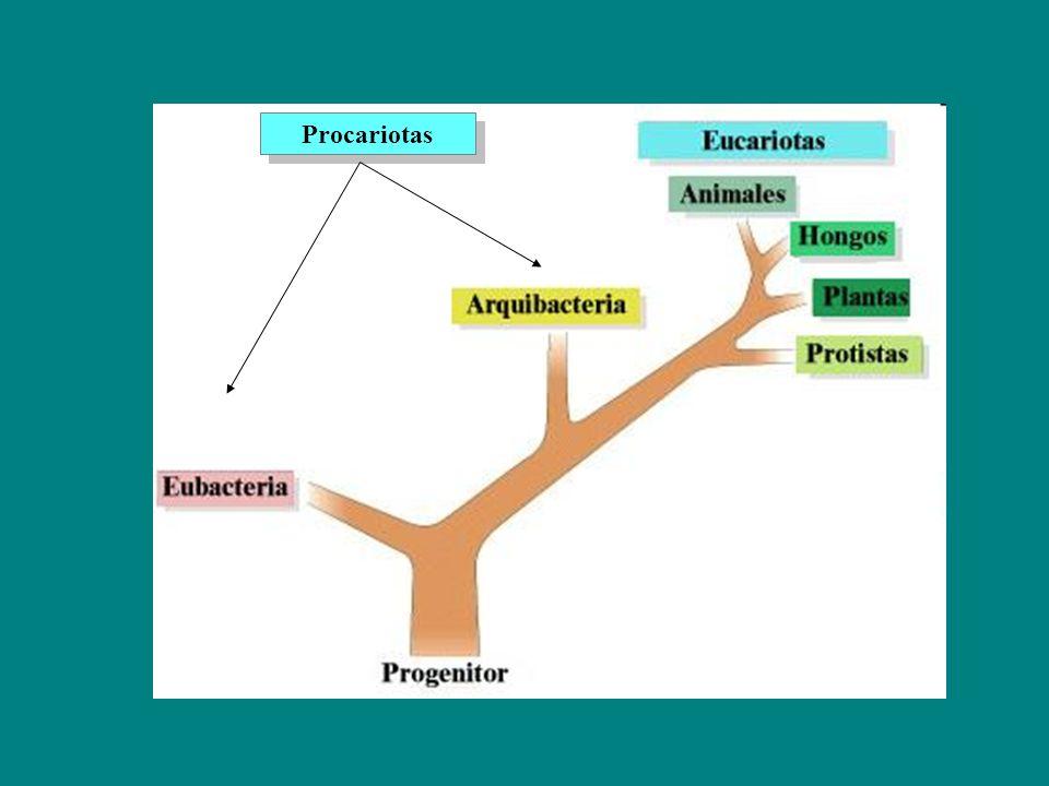 Procariotas