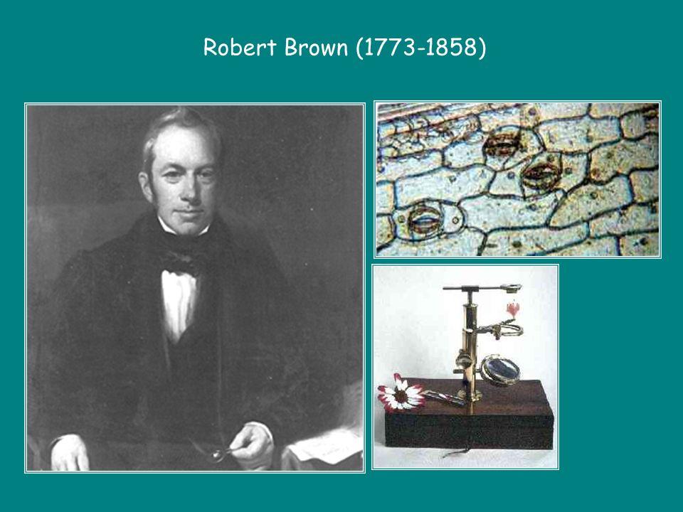Robert Brown (1773-1858)