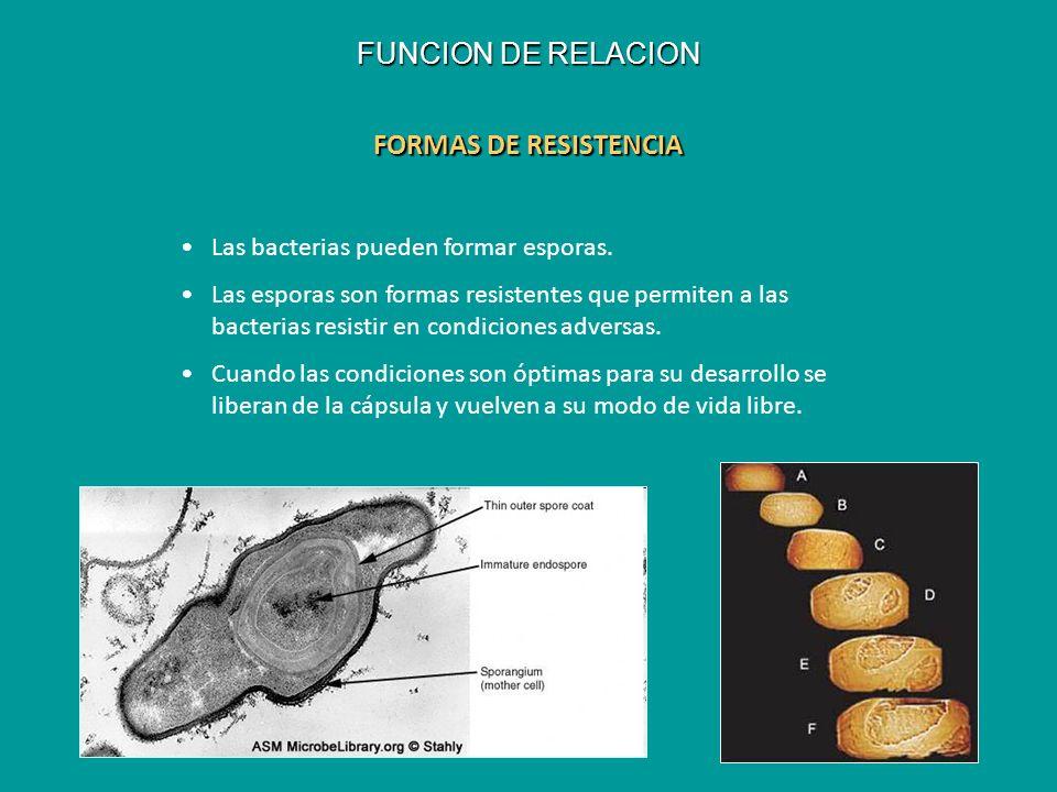 FORMAS DE RESISTENCIA Las bacterias pueden formar esporas. Las esporas son formas resistentes que permiten a las bacterias resistir en condiciones adv