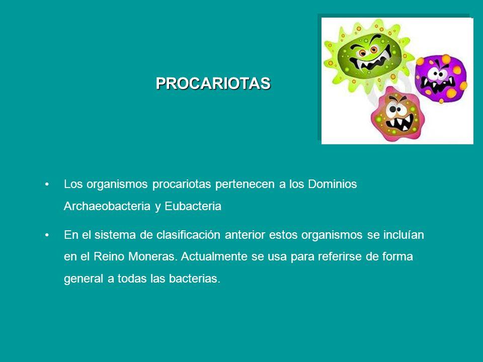 PROCARIOTAS Los organismos procariotas pertenecen a los Dominios Archaeobacteria y Eubacteria En el sistema de clasificación anterior estos organismos