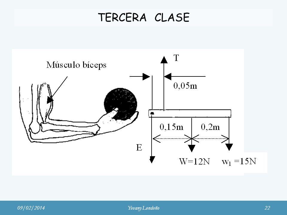 TERCERA CLASE Músculo bíceps 09/02/2014Yovany Londoño22