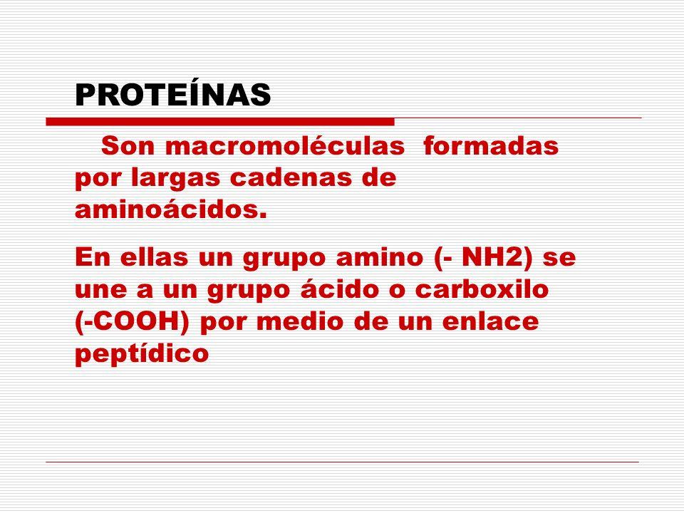 PROTEÍNAS Son macromoléculas formadas por largas cadenas de aminoácidos. En ellas un grupo amino (- NH2) se une a un grupo ácido o carboxilo (-COOH) p