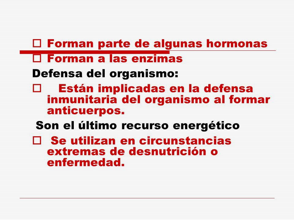 Forman parte de algunas hormonas Forman a las enzimas Defensa del organismo: Están implicadas en la defensa inmunitaria del organismo al formar anticu