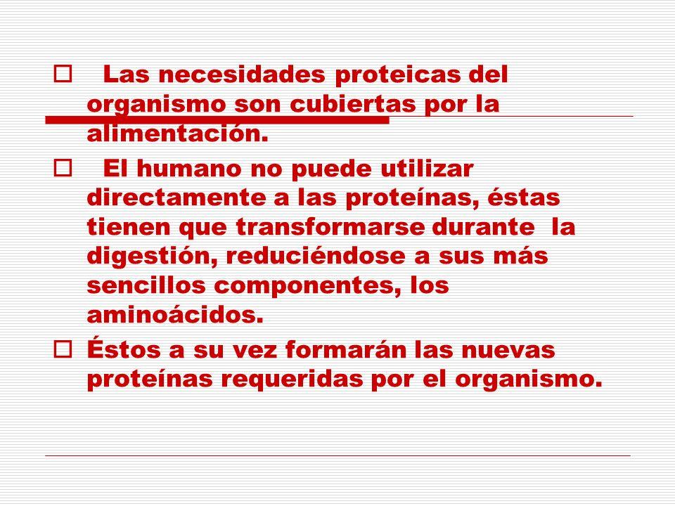 Las necesidades proteicas del organismo son cubiertas por la alimentación. El humano no puede utilizar directamente a las proteínas, éstas tienen que
