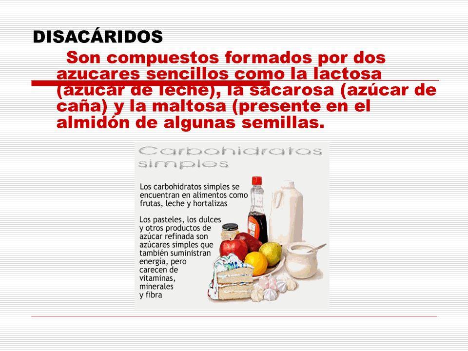 DISACÁRIDOS Son compuestos formados por dos azucares sencillos como la lactosa (azúcar de leche), la sacarosa (azúcar de caña) y la maltosa (presente