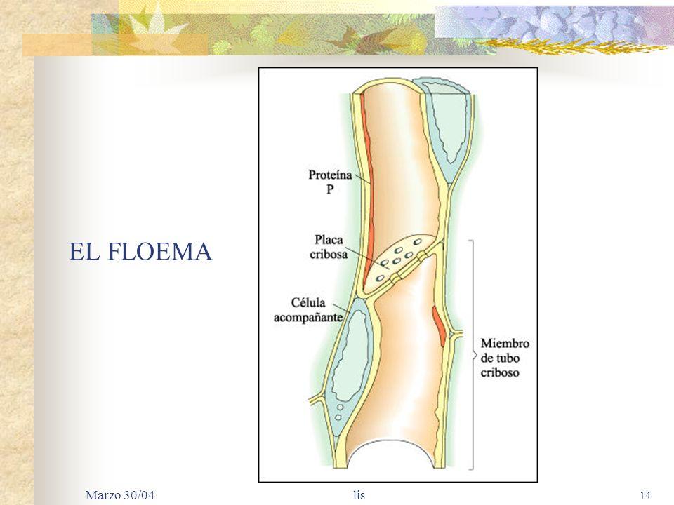 Marzo 30/04 lis 13 TEJIDOS DE LAS PLANTAS Un tejido es un grupo de células que se especializan en una misma función: VASCULAR: transportan fluidos y s