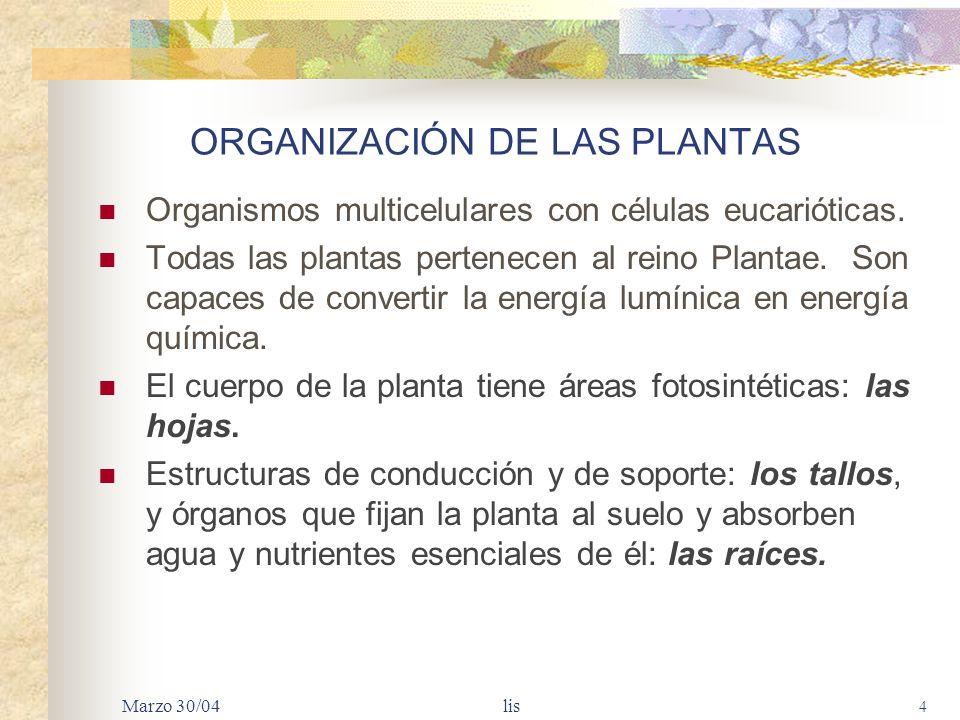 Marzo 30/04 lis 4 ORGANIZACIÓN DE LAS PLANTAS Organismos multicelulares con células eucarióticas.