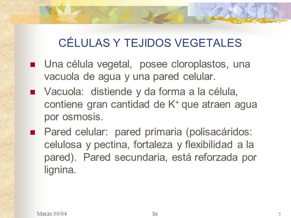 Marzo 30/04 lis 5 CÉLULAS Y TEJIDOS VEGETALES Una célula vegetal, posee cloroplastos, una vacuola de agua y una pared celular.