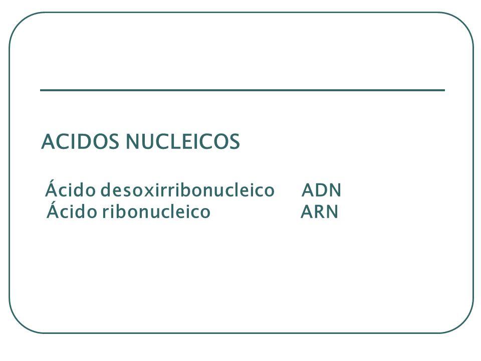 ACIDOS NUCLEICOS Ácido desoxirribonucleico ADN Ácido ribonucleico ARN