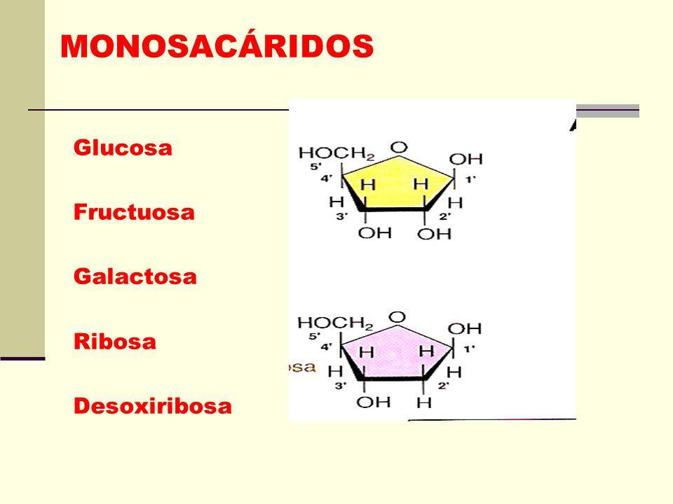 MONOSACÁRIDOS Azucares sencillos, sólidos blancos, de sabor dulce, cristalinos y solubles en agua.