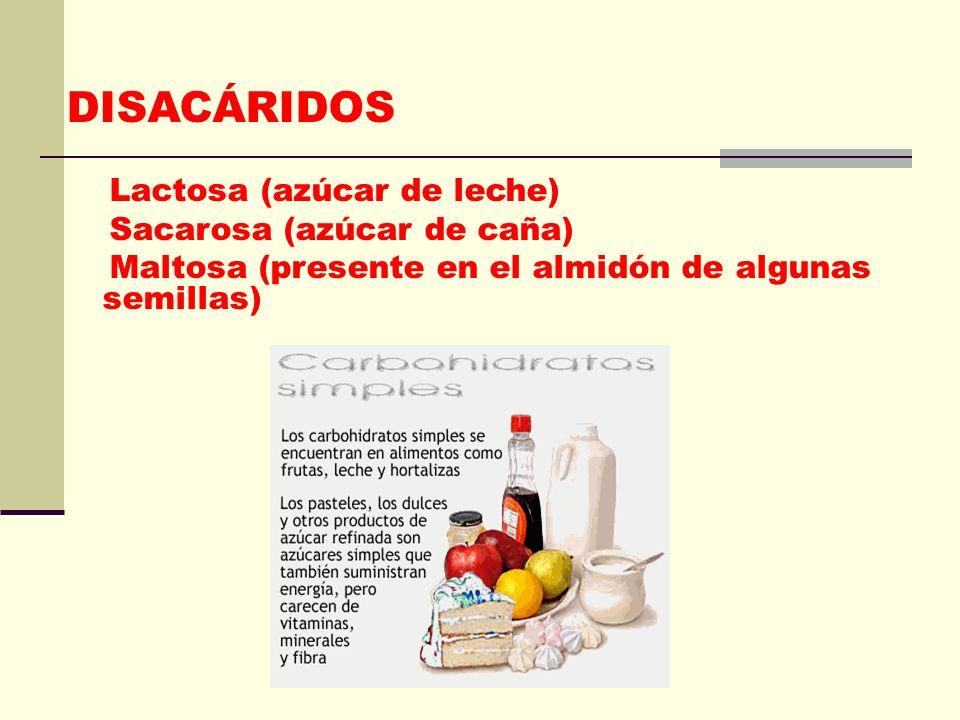 MONOSACÁRIDOS Glucosa Fructuosa Galactosa Ribosa Desoxiribosa