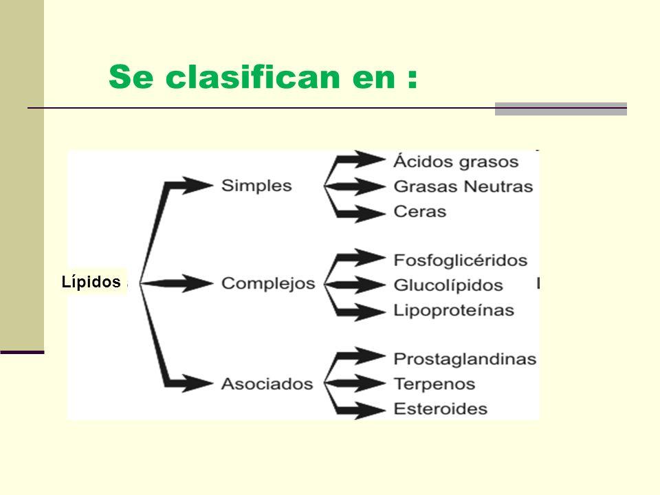 Forman un grupo de sustancias oleosas y grasosas que son insolubles en agua y son solubles en disolventes orgánicos, como éter, cloroformo y benceno.