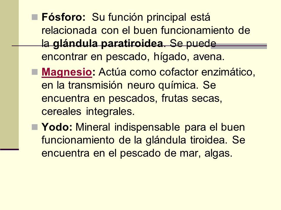 Fósforo: Su función principal está relacionada con el buen funcionamiento de la glándula paratiroidea.