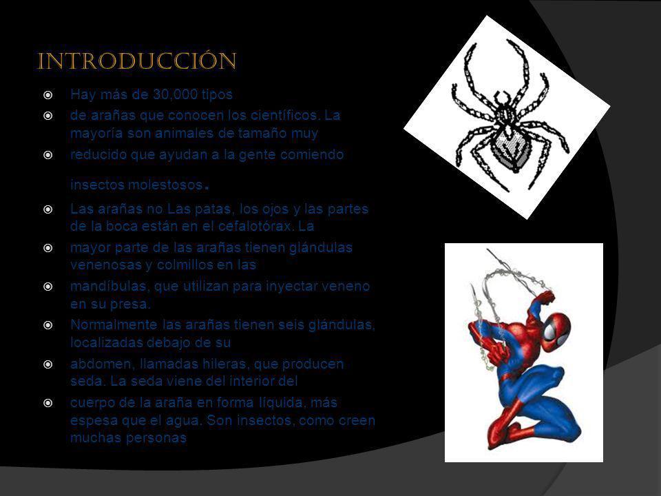 Introducción Hay más de 30,000 tipos de arañas que conocen los científicos. La mayoría son animales de tamaño muy reducido que ayudan a la gente comie