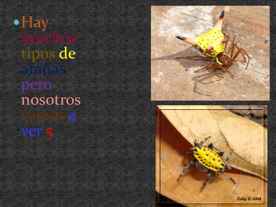 Hay muchos tipos de arañas pero nosotros vamos a ver 5