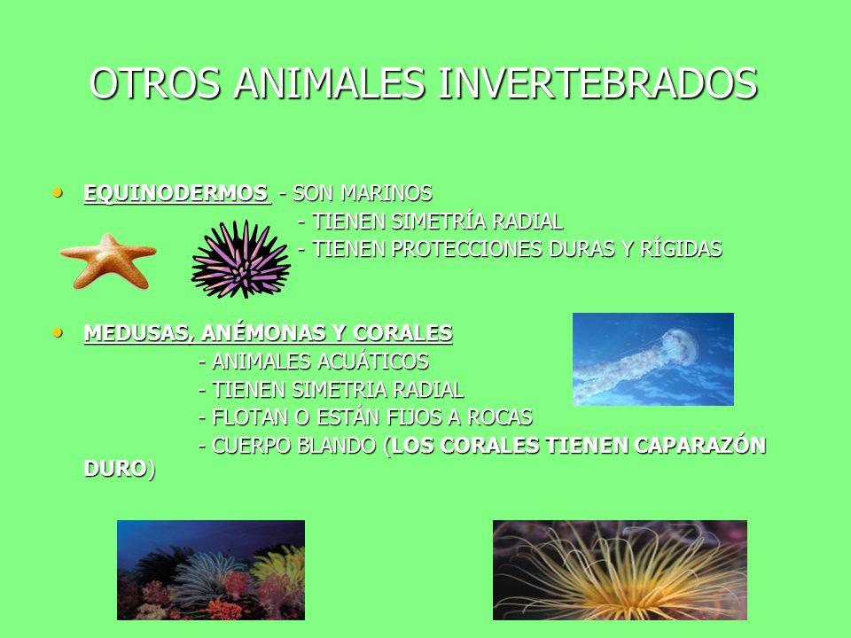 OTROS ANIMALES INVERTEBRADOS GUSANOS - TERRESTRES (lombriz) GUSANOS - TERRESTRES (lombriz) - ACUÁTICOS (nereis) - ACUÁTICOS (nereis) - PARÁSITOS (sang